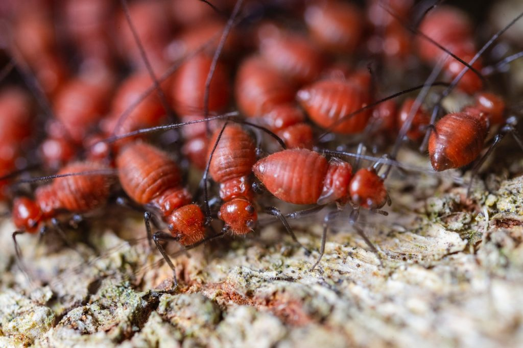 termites destroying your home